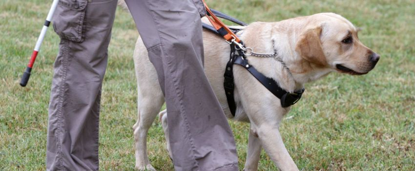 Guide Dogs Prepares For A Future World That Includes Drone Deliveries
