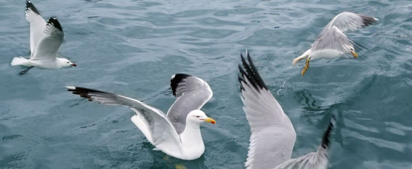 RSPB Says Global Seabird Population At Risk