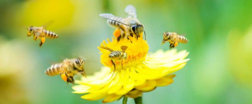 WWF Worried About The Decline Of Bee PopulationsIn The UK