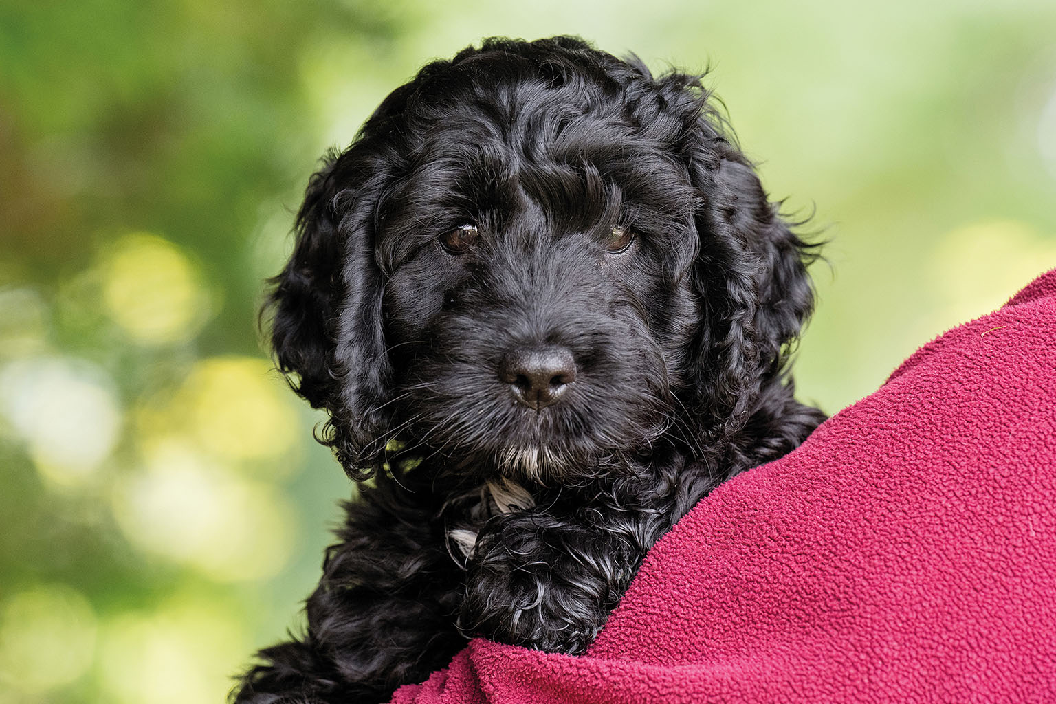 Sponsor A Puppy Bella