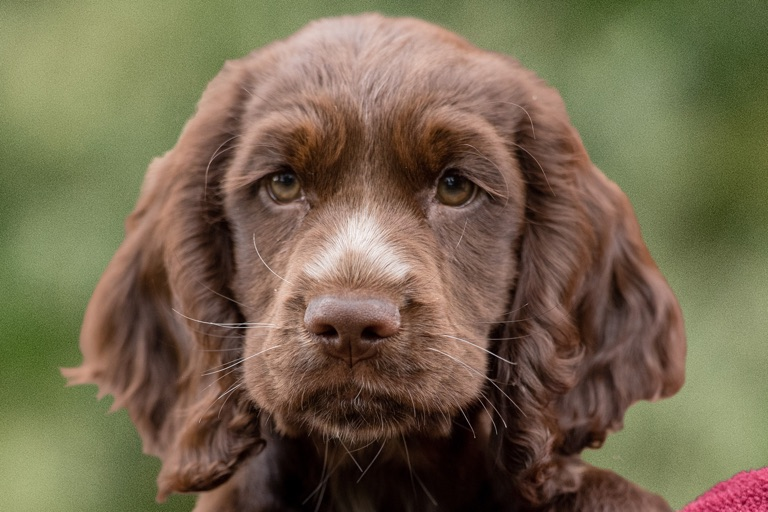 Sponsor a Puppy Bertie