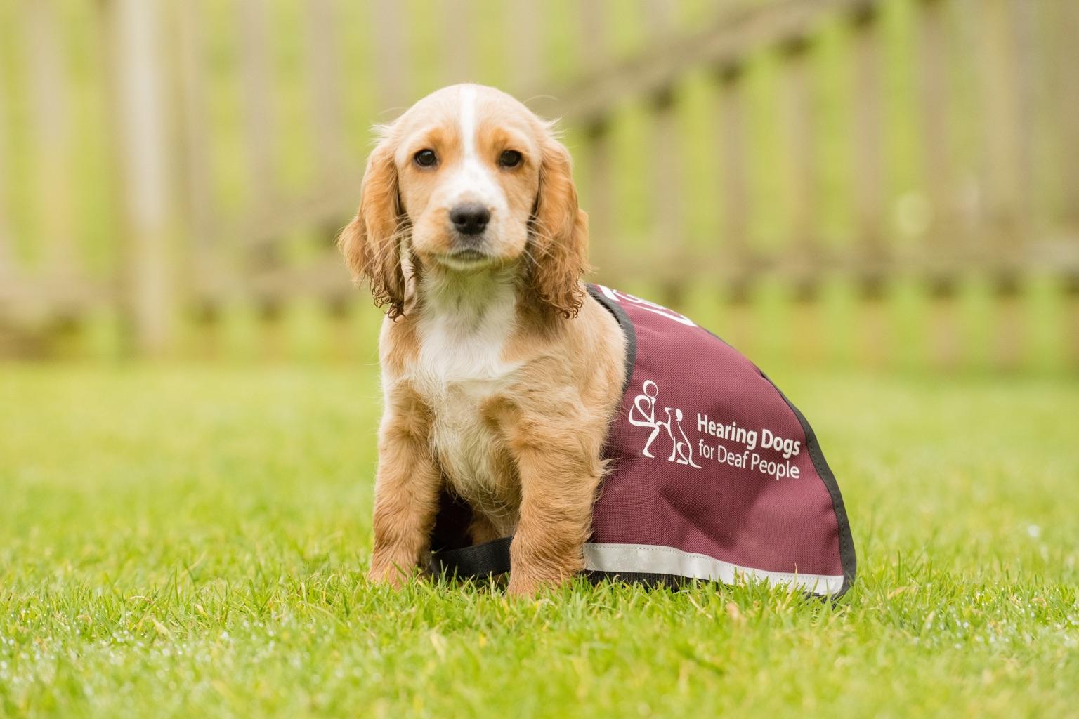 Sponsor a Puppy Sandie