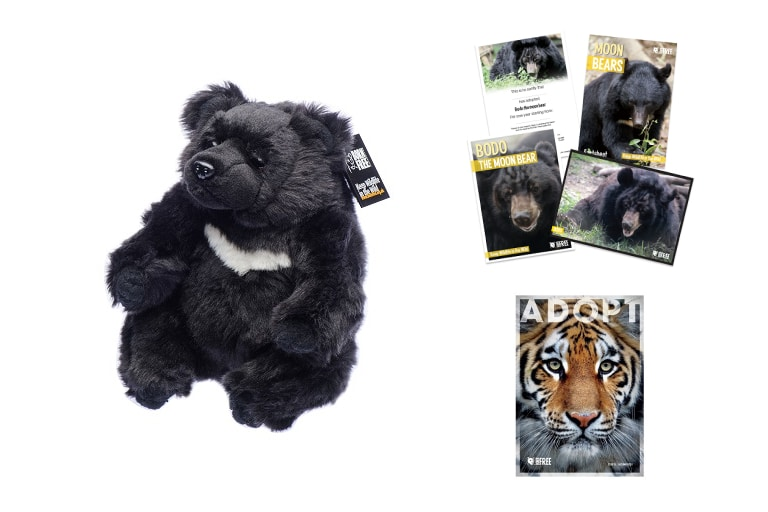 Adopt a Moon Bear