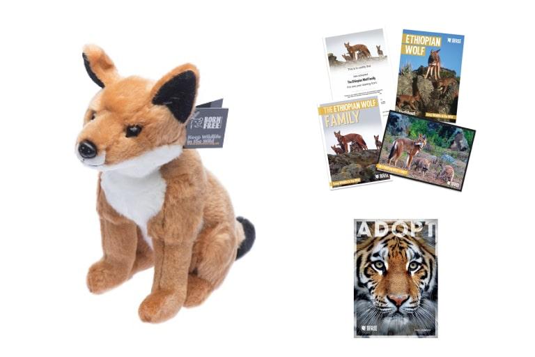 Adopt an Ethiopian Wolf